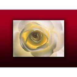Fotografia The Roses White Cm 80x60