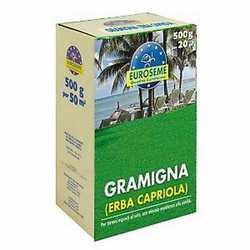 Semi per prato Gramigna 0,5 kg