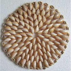 Centrino di Conchiglie da cm 16
