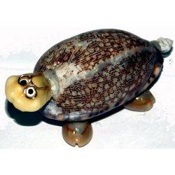 Conchiglia tartaruga cm 9