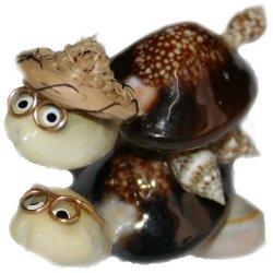 Conchiglie tartaruga cm 4
